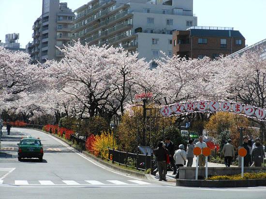 お花見三昧(小石川植物園)にて4/6日_f0030085_2036637.jpg