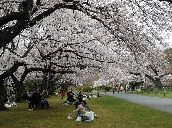 お花見三昧(小石川植物園)にて4/6日_f0030085_2044232.jpg