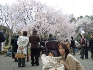 六義園のしだれ桜_e0030586_0332749.jpg