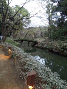 六義園のしだれ桜_e0030586_0332979.jpg