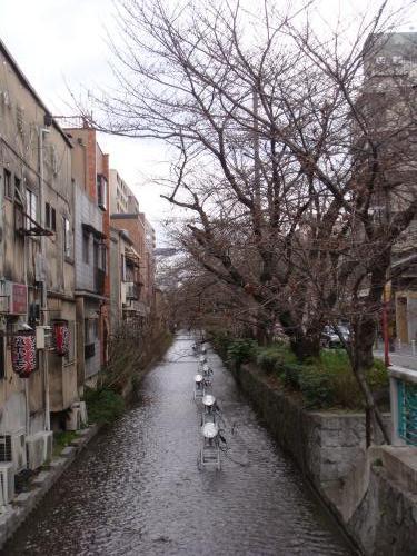 桜_f0201286_86210.jpg