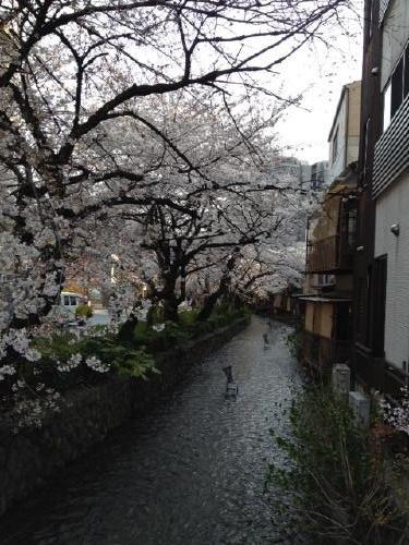 桜_f0201286_873561.jpg
