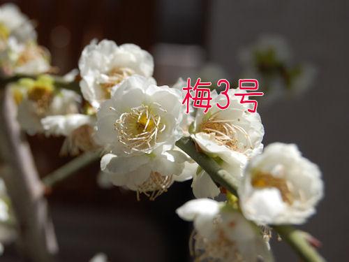 c0195787_024222.jpg