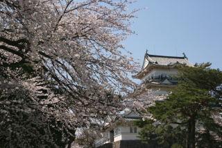 小田原城と桜_e0231387_16503665.jpg