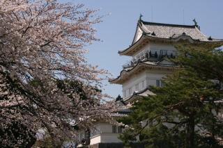 小田原城と桜_e0231387_1650552.jpg