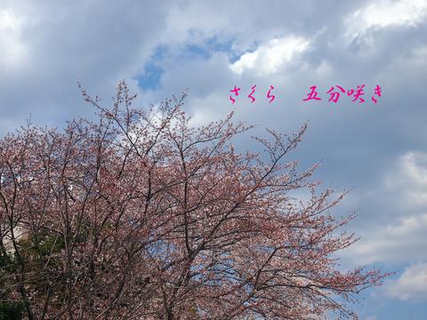 b0012595_03456.jpg