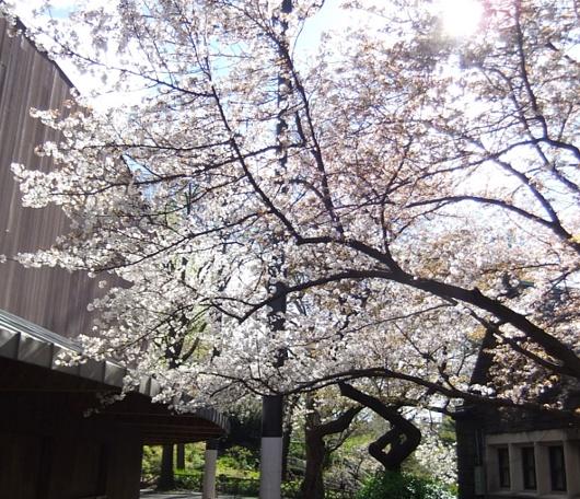 セントラルパークの春_b0007805_1257594.jpg
