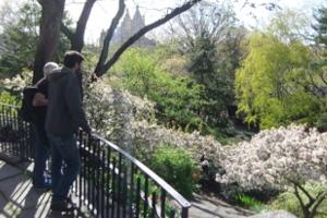 シェークスピア・ガーデンの春の様子_b0007805_2313107.jpg