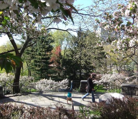 シェークスピア・ガーデンの春の様子_b0007805_23132176.jpg