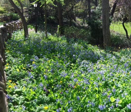 シェークスピア・ガーデンの春の様子_b0007805_23133167.jpg