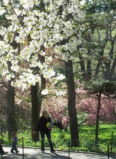シェークスピア・ガーデンの春の様子_b0007805_23141926.jpg