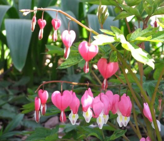シェークスピア・ガーデンの春の様子_b0007805_2314826.jpg