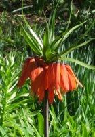 シェークスピア・ガーデンの春の様子_b0007805_23213517.jpg