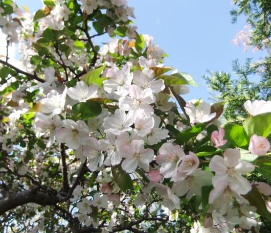 シェークスピア・ガーデンの春の様子_b0007805_23502825.jpg