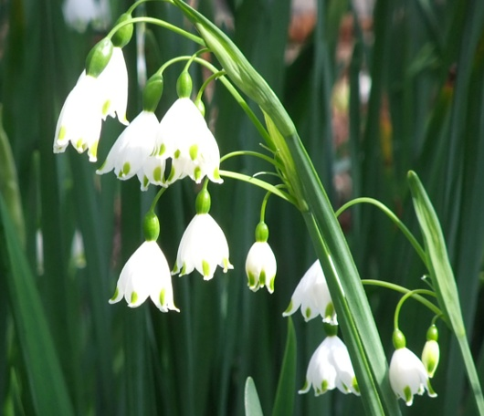 シェークスピア・ガーデンの春の様子_b0007805_23585511.jpg