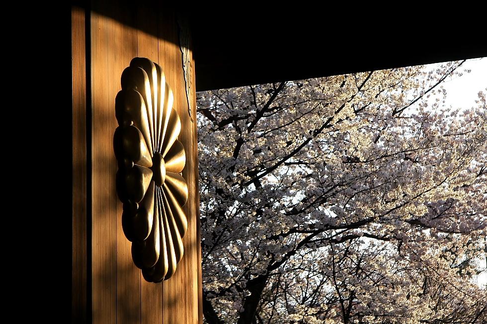 菊と桜_b0190710_23153033.jpg