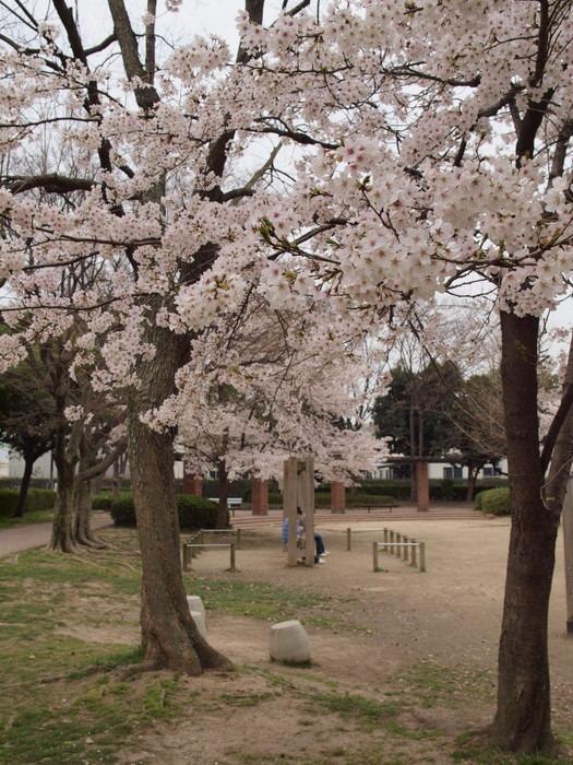 五日市中央公園の桜と佐伯区民文化センター_c0116915_23205168.jpg