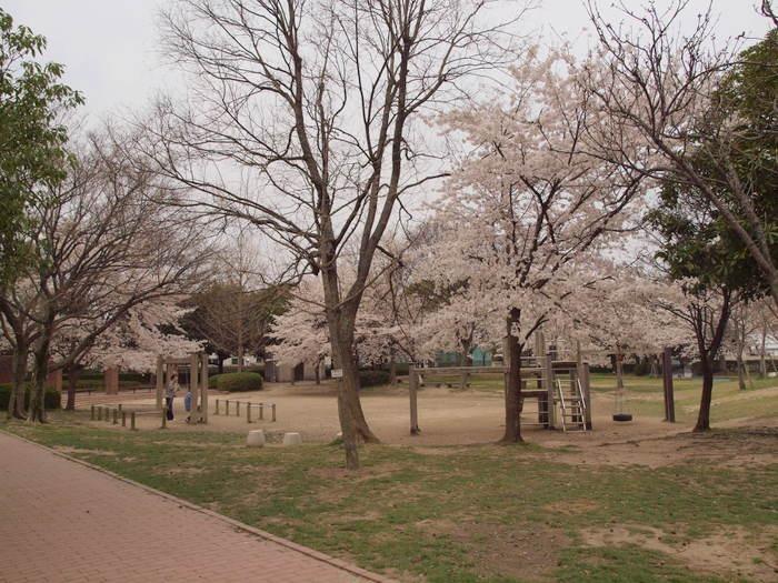 五日市中央公園の桜と佐伯区民文化センター_c0116915_23215531.jpg