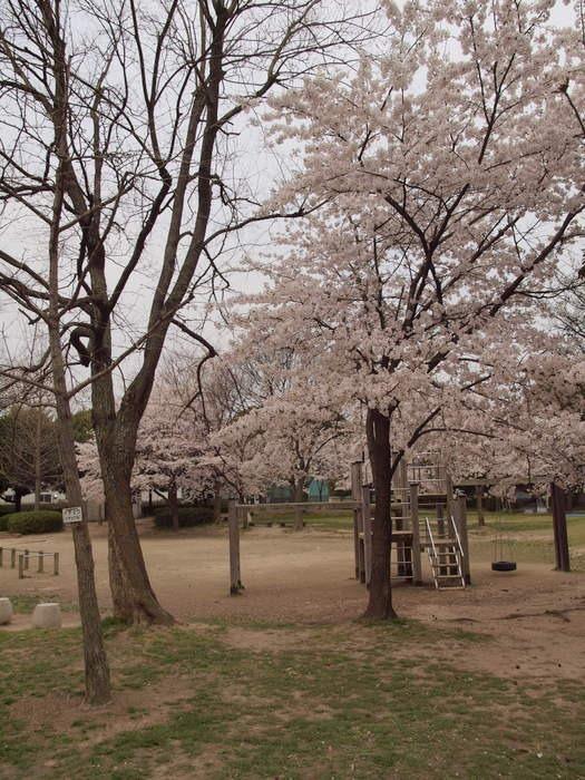 五日市中央公園の桜と佐伯区民文化センター_c0116915_23234094.jpg
