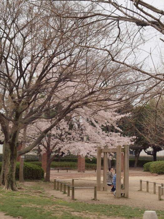五日市中央公園の桜と佐伯区民文化センター_c0116915_23235848.jpg