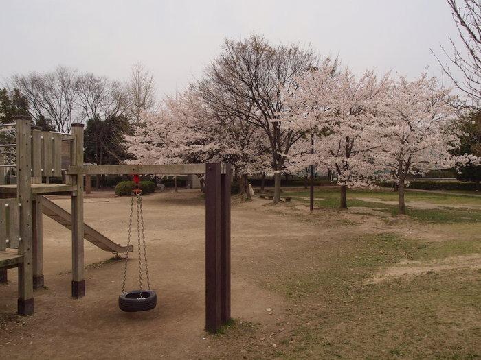 五日市中央公園の桜と佐伯区民文化センター_c0116915_23242660.jpg