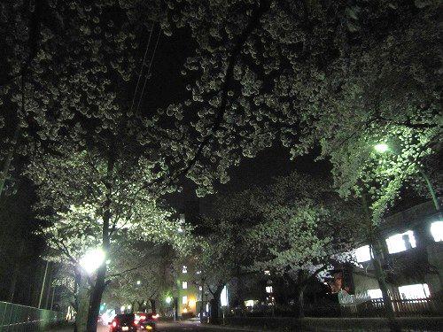 夜桜。_b0157216_23381585.jpg
