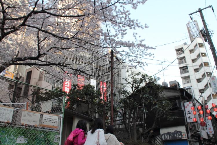 渋谷  のんべい横丁の春_b0061717_1502361.jpg