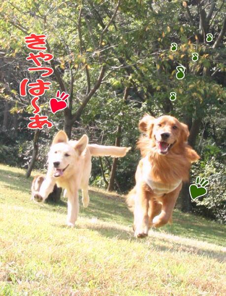 f0109418_1171522.jpg