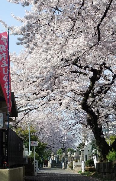 染井霊園_f0085219_21304175.jpg