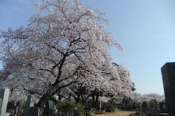 染井霊園_f0085219_21332673.jpg