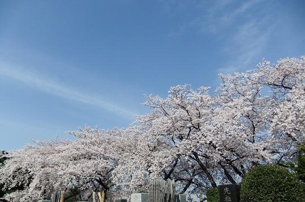 染井霊園_f0085219_21333691.jpg