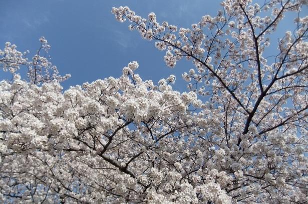 染井霊園_f0085219_2134448.jpg