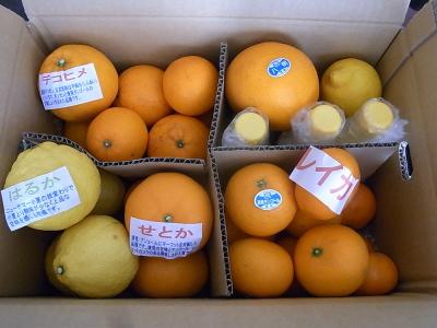 ++柑橘類の食べ比べ大会のスタートです++_e0140921_1526287.jpg
