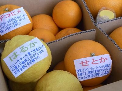 ++柑橘類の食べ比べ大会のスタートです++_e0140921_1527149.jpg