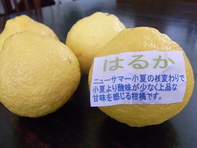 ++柑橘類の食べ比べ大会のスタートです++_e0140921_15301952.jpg