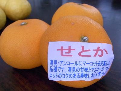 ++柑橘類の食べ比べ大会のスタートです++_e0140921_15302529.jpg