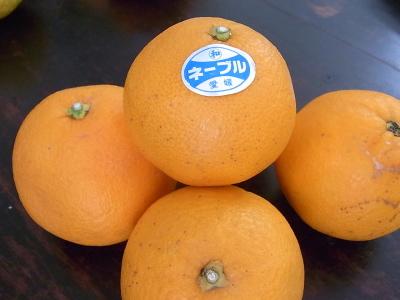 ++柑橘類の食べ比べ大会のスタートです++_e0140921_15303819.jpg