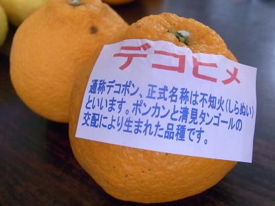 ++柑橘類の食べ比べ大会のスタートです++_e0140921_1530566.jpg