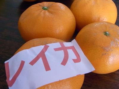 ++柑橘類の食べ比べ大会のスタートです++_e0140921_1531322.jpg