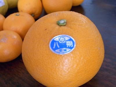 ++柑橘類の食べ比べ大会のスタートです++_e0140921_1531557.jpg