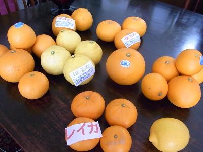 ++柑橘類の食べ比べ大会のスタートです++_e0140921_15323472.jpg