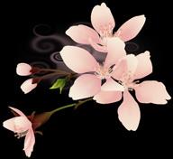 2012マヤ暦★幸運の予言_b0213435_13504811.jpg