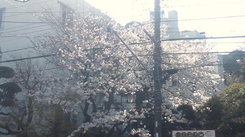春爛漫_a0212145_1853937.jpg
