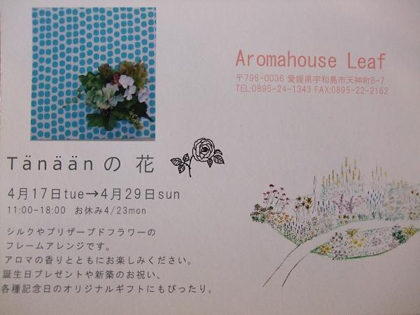 tanaanの花_c0172049_11512789.jpg