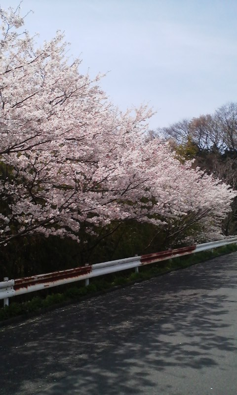 お花見_f0045052_10583242.jpg