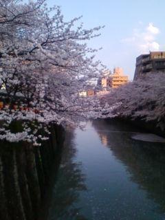 桜満開、その2_f0138653_18494196.jpg