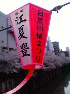桜満開、その2_f0138653_18495494.jpg