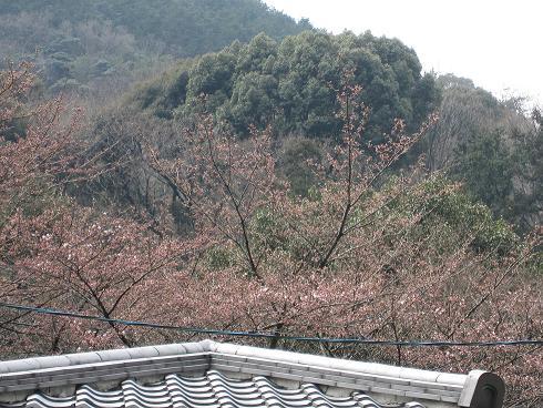 2012年4月10日かねよの桜実況中継_c0078659_12231246.jpg