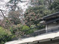 2012年4月10日かねよの桜実況中継_c0078659_12304011.jpg