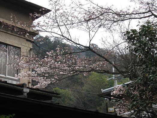 2012年4月10日かねよの桜実況中継_c0078659_1237021.jpg